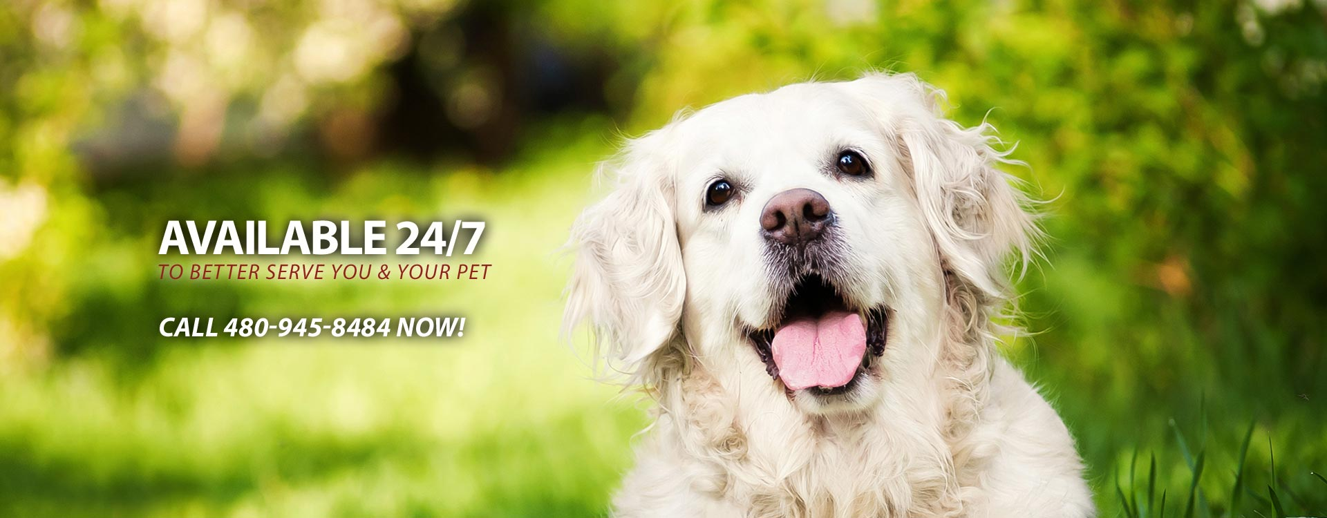24 Hour Cave Creek Veterinary Service